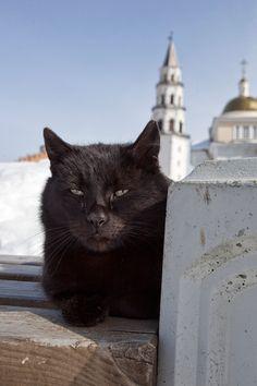 космокотDen Marino; very dignified kitty