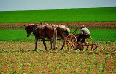 Downloaden - Lancaster County, PA: Amish Man Plowing Field — Stockbeeld #76371793
