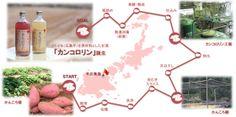 お芋の甘酒カンコロリンは五島列島ファンクラブの甘酒です。