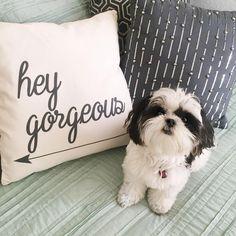 That looks exactly like Alisha Marie's dog close mae