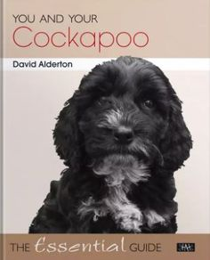"""Read """"You and Your Cockapoo The Essential Guide"""" by David Alderton available from Rakuten Kobo. Crossbreeding between different types of dog is not a new phenomenon, and, over recent years, interest in crossbreeding . Different Types Of Dogs, Charlie Bears, The Essential, Cockapoo, Cool Pets, Dog Training, Dog Breeds, Terrier, Africa"""