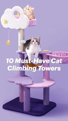 Cat Trees Cheap, Watermelon Cat, Cat Climbing Tree, Wood Cat, Cat Scratcher, Cat Breeds, Cat Toys, Tower, Room