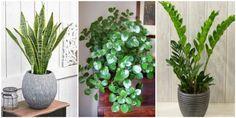 futa eswterikwn xwrwn Echeveria, Garden Plants, Home Decor, Gardening, Decoration, Google, Decor, Decoration Home, Dekoration