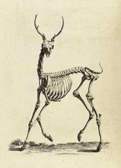 bones with antlers