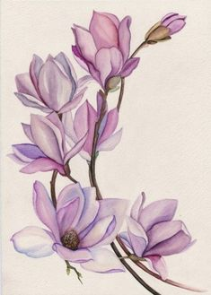 Botanical illustration classes - Friends, open set for daily routine classes on botanical illustration. The course is for those who - Watercolor Flowers, Watercolor Paintings, Watercolor Ideas, Watercolor Tattoo, Tattoo Drawings, Art Drawings, Plant Drawing, Flower Art Drawing, Motif Floral