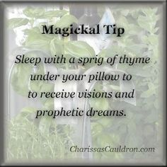 Magickal Tip - Thyme for Visions – Charissa's Cauldron