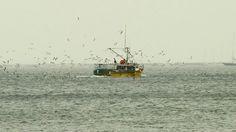 Gloucester's fishermans