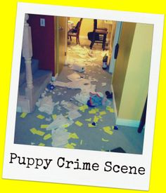 Puppy Crime Scene  cats, dogs, kittens, puppies