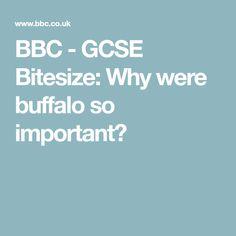 BBC - GCSE Bitesize: Why were buffalo so important?