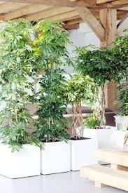 plantes paravent - Recherche Google