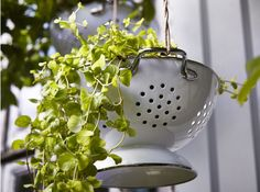 Enamelled colander used as a hanging planter, IKEA GEMAK Hanging Planters, Garden Planters, Garden Art, Home And Garden, Hanging Basket, Outdoor Dining Furniture, Garden Furniture, Outdoor Decor, Furniture Dolly