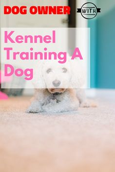 Kennel training is useful with youthful dogs and also older puppies with stress and anxiety issues. The greatest goal regarding crate exercising is trying to keep your dog away from harms approach. Kennel Training A Dog, Crate Training, Dog Training Tips, Stress And Anxiety, Dog Owners, Crates, Helpful Hints, Stuff To Do, Challenges
