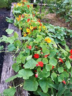 Permaculture, Shake, Cucumber, Vines, Gardening, Paris, Banana, Plant, Smoothie