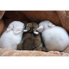 @bunnies_r_us adorable bunny pic