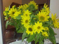 Auringonkukat maljakossa