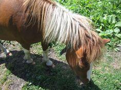 O cavalinho :D. Animals, Horse, Flowers, Animales, Animaux, Animal, Animais