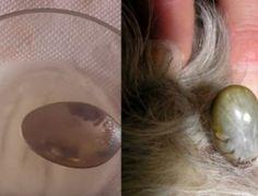Receita natural e muito simples para livrar o seu animal de estimação das pulgas…