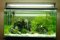 how to begin a new aquarium! Equipment lists and cycling advice