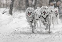 Kearney Dog Sled Races #2 by yld882008  http://ift.tt/2kHNwQ5
