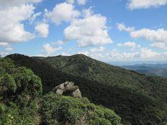 A little green - Monte Verde - MG - Brasil