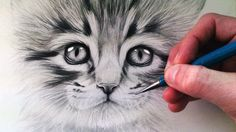 How to Draw a Kitten - YouTube