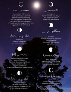 Moon Phases Poster by Bronwyn Simons