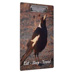 Eat Sleep Travel Australian Magpie clipboard - travel photos wanderlust traveling pictures photo