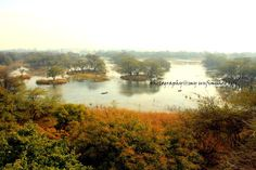 My Unfinished Life: Sultanpur Bird Sanctuary ~ A Day of Amateur Birding