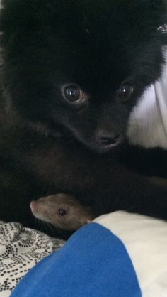 Dahlia and Remy the rat