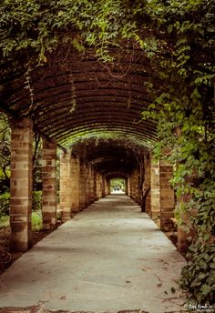 Beautiful tunnel at Athens National Garden! © Popi Kmb
