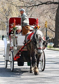 Central Park rides