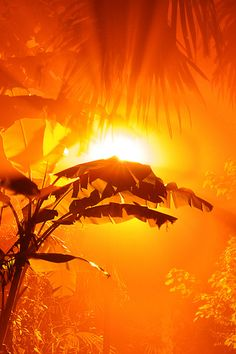 Orange.  Sun Breaking through