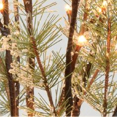 "Our new, icy lighted pine twigs look so real, you can almost smell them! Mix with our berry branches to make the ultimate holiday arrangement! This piece is  19"" tall and has 40 led lights on multiple..."