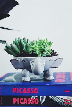If you put small rocks at the bottom, and drain access water after watering, almost *anything* can become a succulent planter--even this adorable elephant! (Spruce Up Your Space with a 5K #WorldMarketMakeover www.worldmarket.com/sweepstakes)