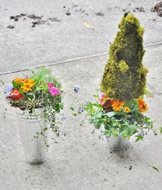 Moss topiaries with annuals planted at the base Center pieces for May Day, Mimosas and More