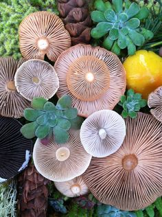 Mushroom Medley Photo #3 By Jill Bliss