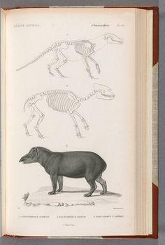 Le règne animal distribué d'après son organisation : pour servir de base à l'histoire naturelle des animaux et d'introduction à l'anatomie comparée by Cuvier, Georges,baron, et. al (Found on Archive.org)