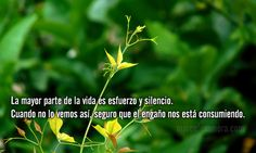 LA MAYOR PARTE DE LA VIDA ES ESFUERZO Y SILENCIO. Cuando no lo vemos así seguro que el engaño nos está consumiendo.http://www.marcelozamora.com/escritos/la-mayor-parte-de-la-vida-es-esfuerzo-y-silencio.html