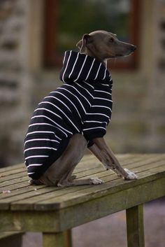 Solidifying our love of stripes, these hoodies are one of our favourites! Made from organic cotton fleece, they have the softest back which will feel so yummy against your iggies skin. The hood has double thickness so the stripes continue all round. We have added our new and super cute