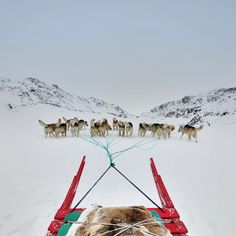 View from the sledge with 15 dogs pulling us into the #arctic wilds! #travel #Greenland #adventure @findingremote #remote #traveldeeper