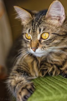 "500px / Photo ""Kitty"" by Jakub Duda Beautiful face"