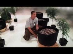 How to grow like a pro WEED - High Times High Times, Like A Pro, Weed, Gardening, Youtube, Lawn And Garden, Marijuana Plants, Youtubers, Youtube Movies