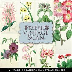 Far Far Hill - Free database of digital illustrations and papers: Freebies Vintage Botanical Illustrations