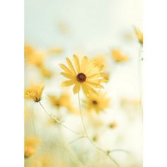 Image about flowers in Nature by Anežka on We Heart It Yellow Flowers, Wild Flowers, Beautiful Flowers, Yellow Wildflowers, Daisy Flowers, Pastel Yellow, Bright Yellow, Sunflowers, Beautiful Things