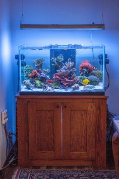 TheKleinReef Congratulations to community member TheKleinReef and his 65 gallon reef aquarium for being selected for our November Reef Profile! Below is the aquarium profile TheKleinReef has written for us sharing his experiences in the ho...