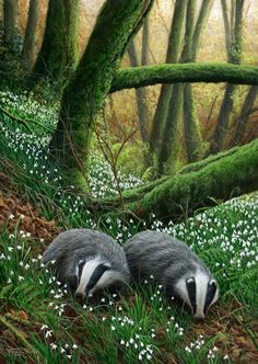 I love our British countryside and wildlife….♥ Badgers with a British accent. Art And Illustration, Illustrations, Badger Illustration, Woodland Illustration, Wildlife Paintings, Wildlife Art, Forest Animals, Woodland Animals, Beautiful Creatures