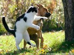 Risultati immagini per animali divertenti