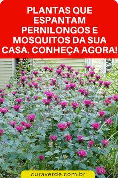 Conviver com esses insetos não é só incômodo.Eles causam doenças e muita coceira.Para você ter ideia, 40% do planeta tem risco de sofrer com dengue por causa dos mosquitos.Os sintomas dessa doença são horríveis. #dicas #truques #receitas #caseiro #casa #mosquitos #comoespantarmosquitos #espantarmosquitonaturalmente #aromasparaespantarmosquitos Mosquito Repelling Plants, Little Gardens, Gravel Garden, Go Green, Wabi Sabi, Feng Shui, Dengue, Succulents, Backyard