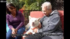 From Rags to Riches- A Story of Miley the Dog *I've seen the story of Miley's rescue before, but not the rest of the story until now...What a lucky dog AND new mom! -via YouTube