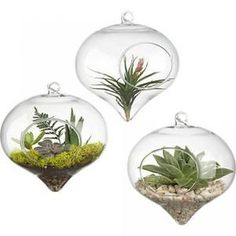 Cheap pot toy, Buy Quality pot house directly from China decorative pot covers Suppliers: Terrarium Glass Vaso Top Hanging Vase Dinner Planter Terrarium Container Pots Home Wedding Decor Terrarium Decor Terrarium, Hanging Glass Terrarium, Terrarium Containers, Glass Planter, Air Plant Terrarium, Hanging Vases, Container Plants, Container Gardening, Potted Ferns